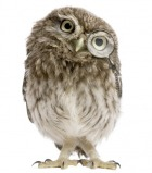 small owl with monocle