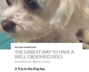 Louis the Blogging Dog as Spa Dog